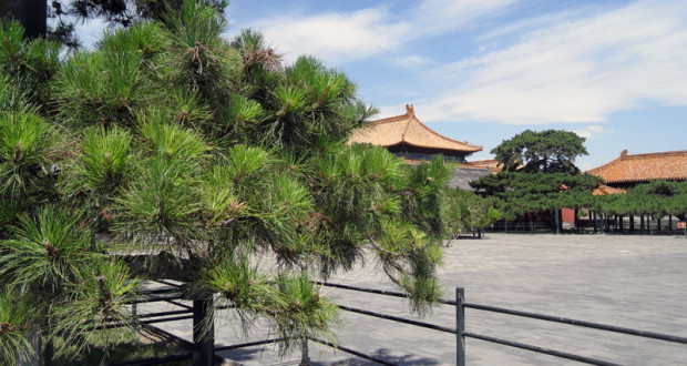 Back of the Forbidden City